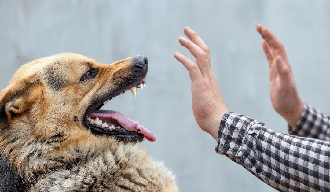 Can You Sue for Being Bit by a Dog in Indiana?